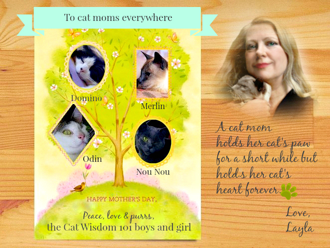 Mother's day cat wisdom 101