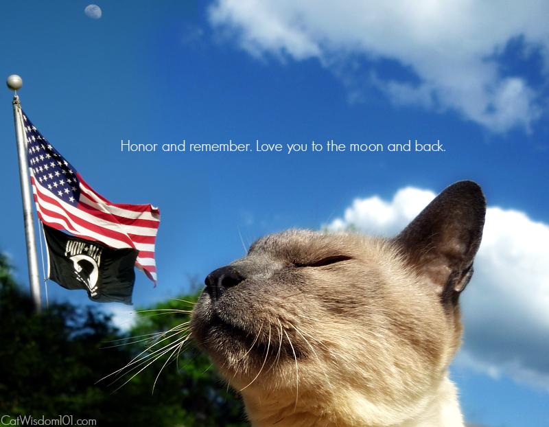 memorial day -cat merlin