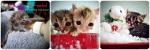 neo-natal foster kittens