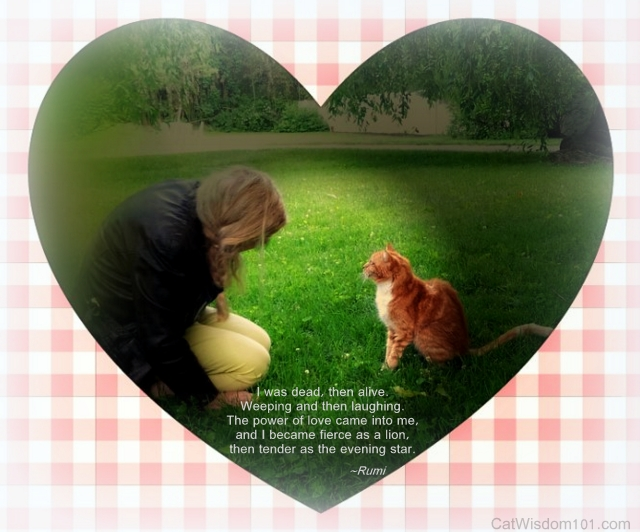 Layla Morgan Wilde & Radish cat-love quote