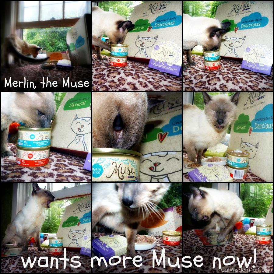 Muse Cat Food-Merlin