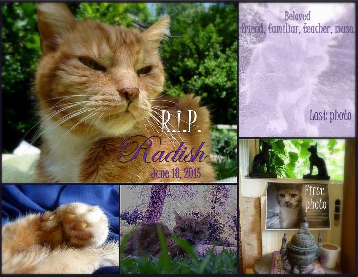 Radish cat memorial