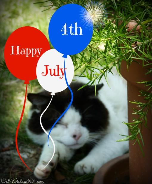 domino cat july4th