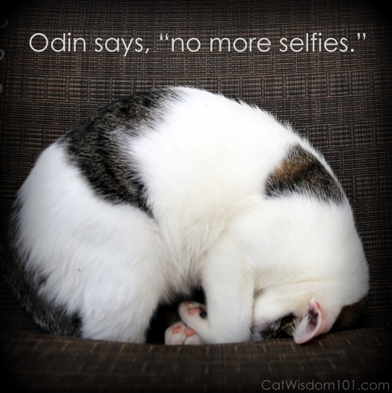 Odin selfies cat