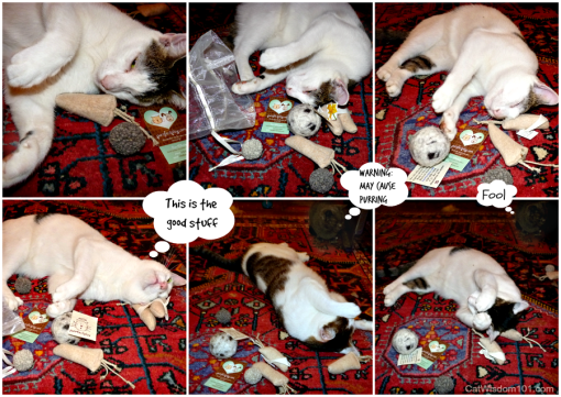 Purrfectplay Collage catnip toys