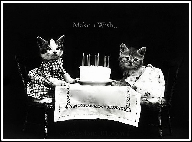 antique cat birthday photo