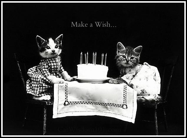 antique cat birthday photo