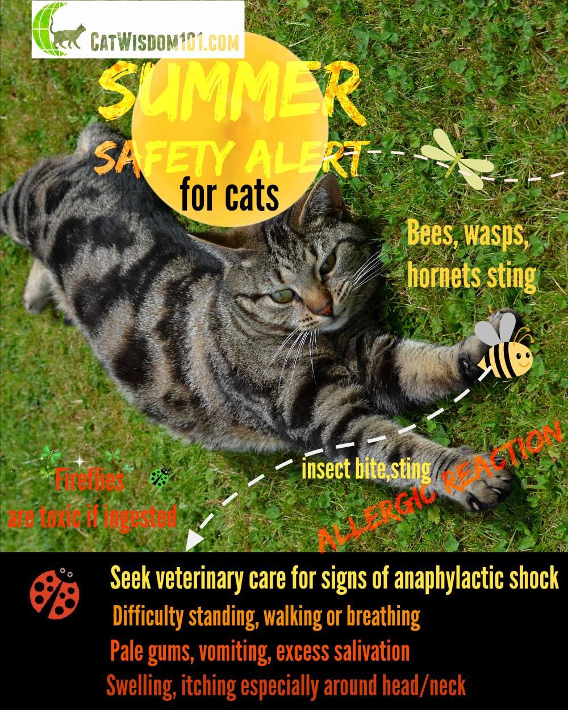 bug bites summer cat care