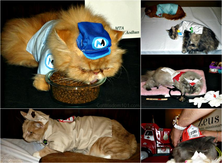 Ada Nieves cat fashion 2015