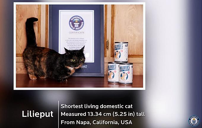 Lilieput-shortest cat