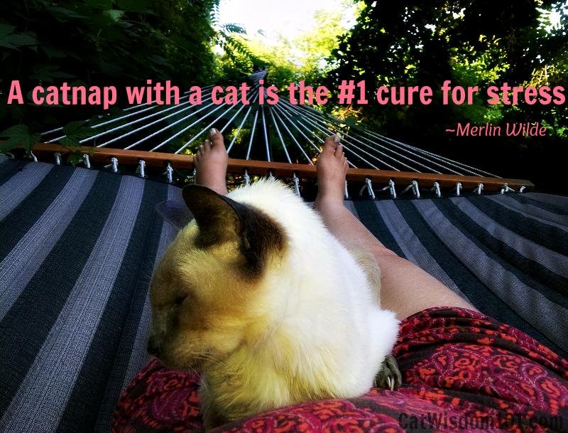 Merlin hammock catmom stress cure