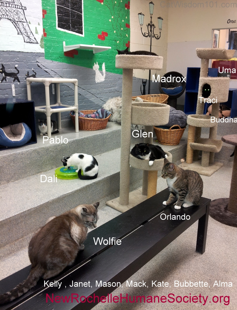 New Rochelle Humane Society cats