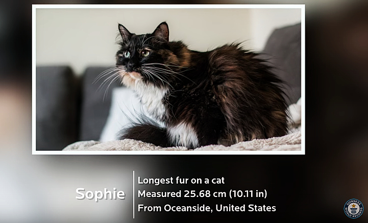 Sophie- longest fur cat