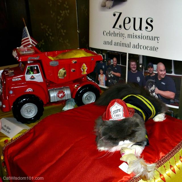 Zeus cat