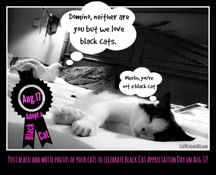 black cat appreciation day-Domino- merlin cat