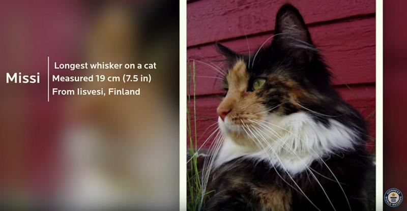 missi-longest cat whiskers
