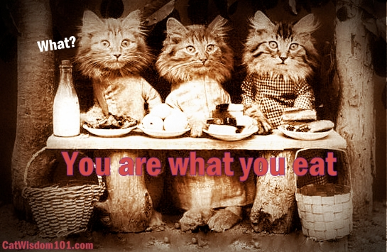 vintage-cat art-photo-you are what you eat