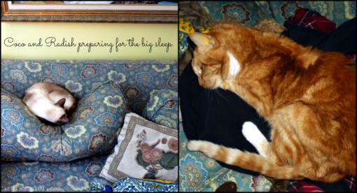 cats big sleep pet memorial day