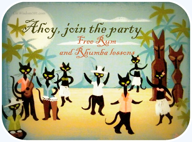 meow like a pirate day-black cat dance