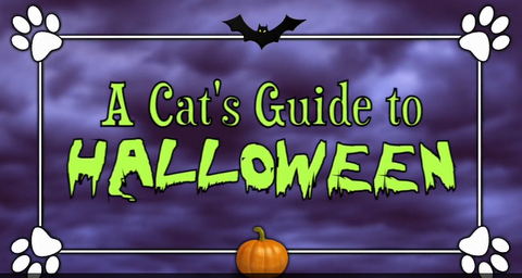 Viral Halloween Cat Video, Tips & Black Cat Infographic