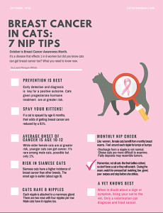 Breast cancer in cats infographic