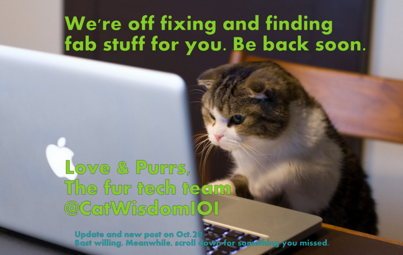 Gone blog fixing and fishing cat wisdom 101 cat computer fix blog sciox Image collections
