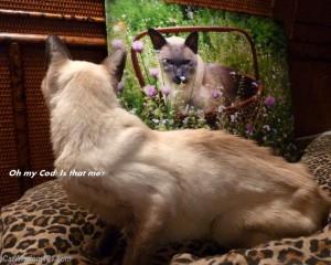 Cat merlin art pop portrait