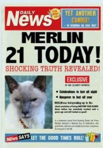 funny cat merlin 21st birthday