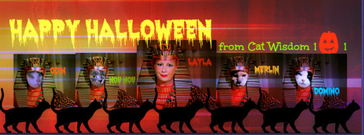 Happy-Halloween-cat-wisdom-101