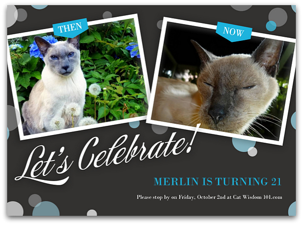 Merlin cat 21 birthday
