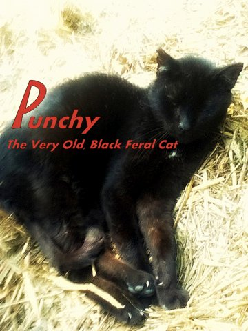 Punchy old black feral cat