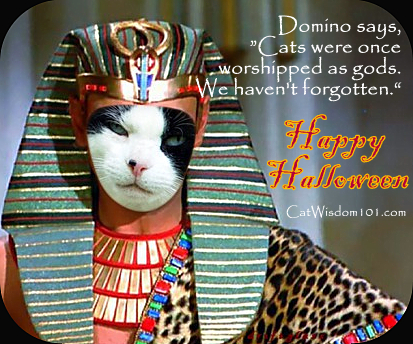 cat quote gods Halloween