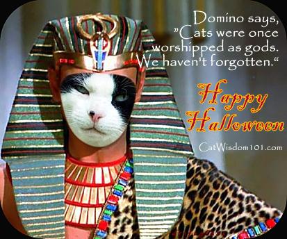 cat quote gods Halloween