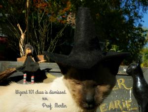 cat wizard merlin
