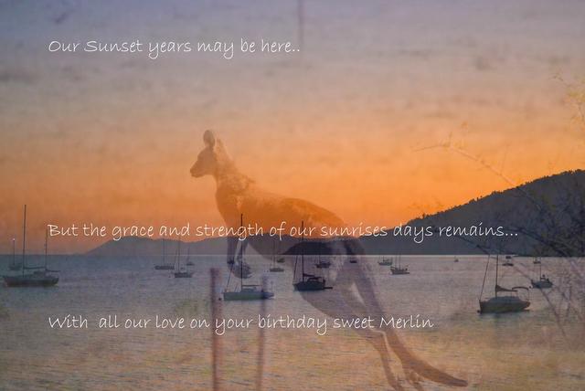 kangaroo sunset quote australia