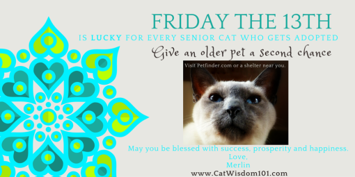 Friday The 13th-adopt a senior pet month