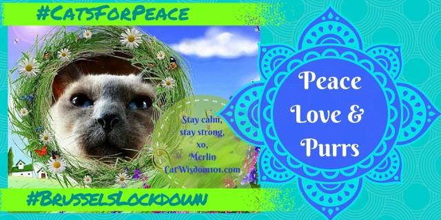 Peace Love & Purrs #brusselslockdown