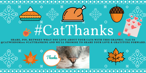 #catthanks graphic cat thanksgiving gratitude