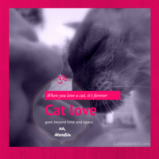cat love quote