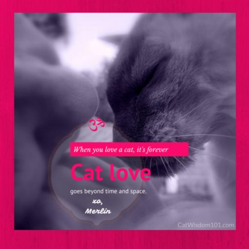 cat love quote