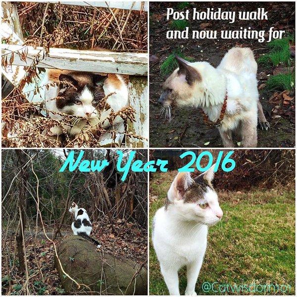 Christmas_2015_cats_newYork_garden