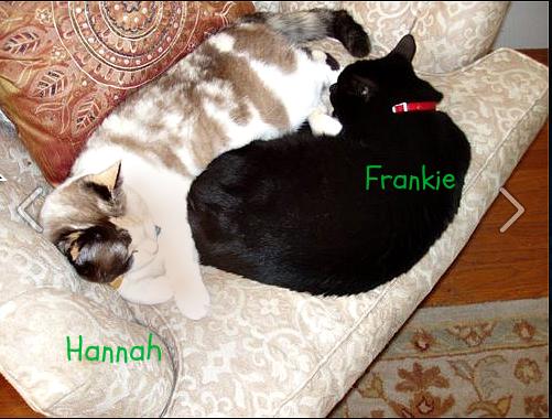 Hannah_frankie_cats