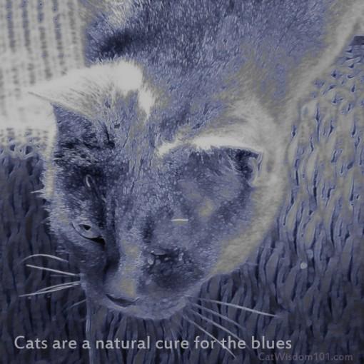 NOUNOU_CAT_QUOTE