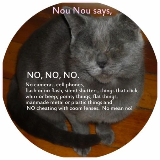 NOU_NOU_CAT