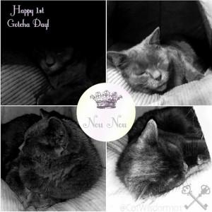 NouNou_gotcha_Day_cat