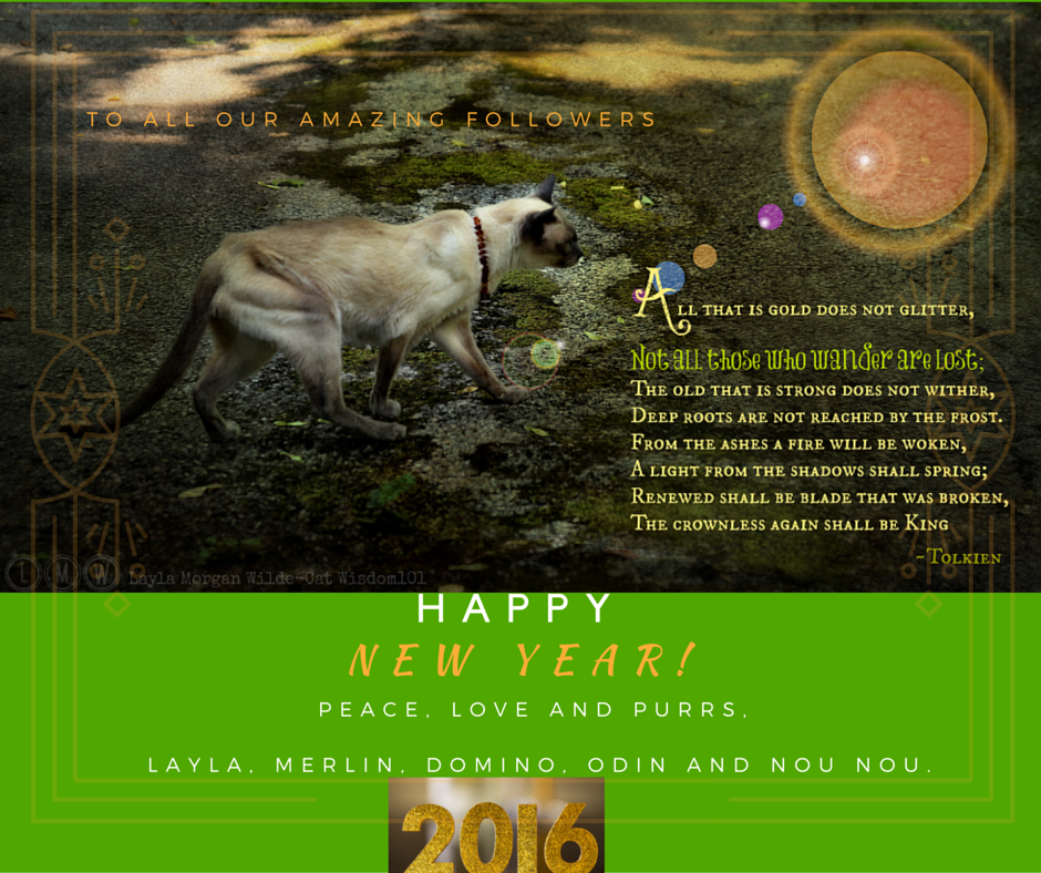 Cats_New_Year_2016