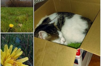 odin_cat_box
