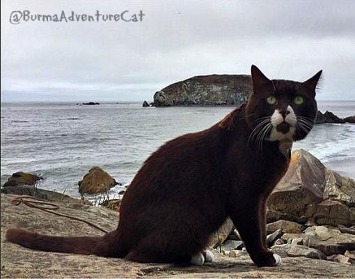 BURMA_adventure_CAT