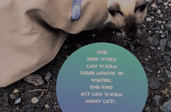 merlin_cat_quote_kind