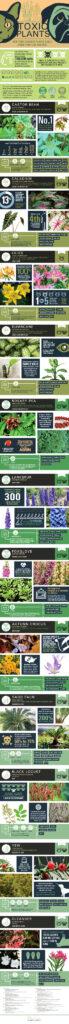Toxic_Plants_pets_infographic_catwisdom101